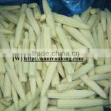 FROZEN BABY SWEET CORN from VIETNAM with HIGH QUALITY