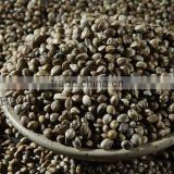 edible hemp seeds for bird