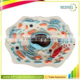 Biological Teaching Aids Plastic Animal Cell Model