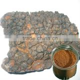 Natural dietary supplement Chaga Mushroom extract