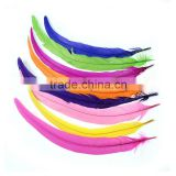 dyed coloured feather rooster tail feathers wholesale
