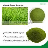 Organic Non-GMO Wheat Grass Powder