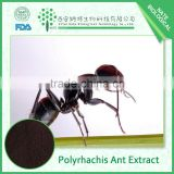 Hot selling China polyrhachis ant powder polyrhachis ant extract