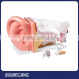 Educational tools of Budget Giant Ear Model shows all major structures related to hearing aids balance
