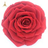 Big Size Preserved Flower Rose for Decor Supplies