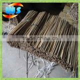 No branches green bamboo cane and bamboo poles