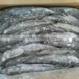 frozen whole round hake fish for sale