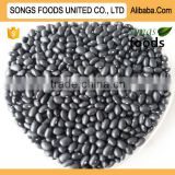 Heilongjiang Black Beans new Crop
