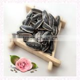 high quality sunflower seeds 363 from Inner Mongolia