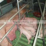 Poultry farms equipment, animal husbandry equipment, plastic floor beams for Pig farming equipment