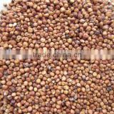 High qualtiy New crop red sorghum with lowest price