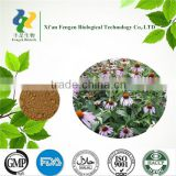 Manufacturer production echinacea p.e. & Echinacea angustifolia