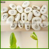 Magic Beans With Words Message Carved Beans