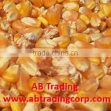 Best quality animal feed yellow corn from India
