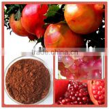 Organic 100% Natural high quality with Best Price 40% Ellagic Acid Pomegranate Extract (HPLC)