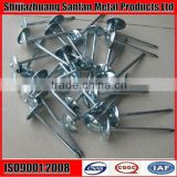 Galvanized umbrella head twisted shank roofing screw