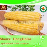 2015 hot sale new products for frozen sweet corn kernels
