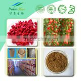 NutraMax Supply-Goji Berry Extract/Goji Berry Extract Powder/Goji Berry Extract Polysaccharide