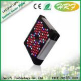 led grow light from jason wang shenzhen