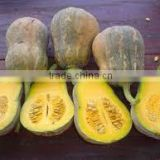 FRESH JAPANESE PUMPKIN GOOD QUALITY - COMPETITIVE PRICE
