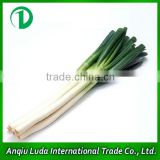 fresh welsh onion