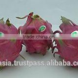 Fresh Dragon Fruit / Pitaya