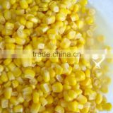 Canned sweet corn24x425ml , nw340, dw250g, vacuum pack