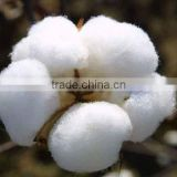Wholesale High Quality Cheap Pakistan Raw Cotton