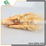 low cost high quality china ginseng extract powder