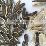 Chinese wholesale sunflower seeds for birds