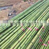 green plastic coated bamboo artificial exercise weighted bamboo poles