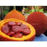 GAC FRUIT (Momordica)-Great Food for Health & Beauty