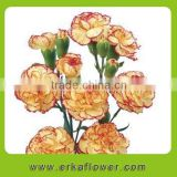 Fresh Cut soap flower High Quality Flower