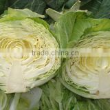 fresh green round 2014 cabbage