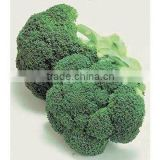 Natural herb plant extract High quality Manufacturer Broccoli Extract 5%;10% Sulforaphane