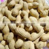 raw peanuts in shell for sale