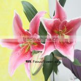 Kunming Flower Water Lily Flower With 10 Stems/Bundle Lily Bulbs Named As Fresh Cut Lily Tiber From Focus/Kunming