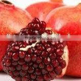 FRESH WONDERFUL POMEGRANATE