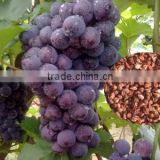 INquiry about 2016 High Germination Rate Grape Seed For Growing