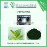 Top quality Chlorophyll, Best price Chlorophyll powder