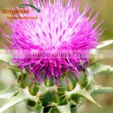 Top quality with free sample Holy thistle seed powder