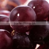 Export Fresh Grapes Price