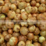Wholesale Alibaba Fresh Yellow Onion in High Quality 2016'