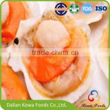 Frozen half shell scallop with roe