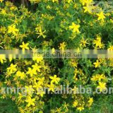High Quality natural extract st johns wort 3 hypericin