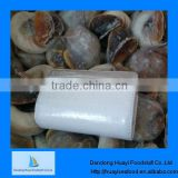 Fresh frozen moon snail for sale