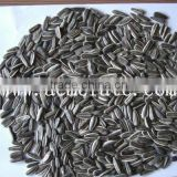 sunflower seeds suppliers