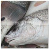 Frozen red drum fish
