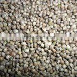 2014 new crop hemp seeds