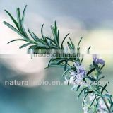 Flavoring Additive Rosemary Extract 30% Rosmarinic Acid